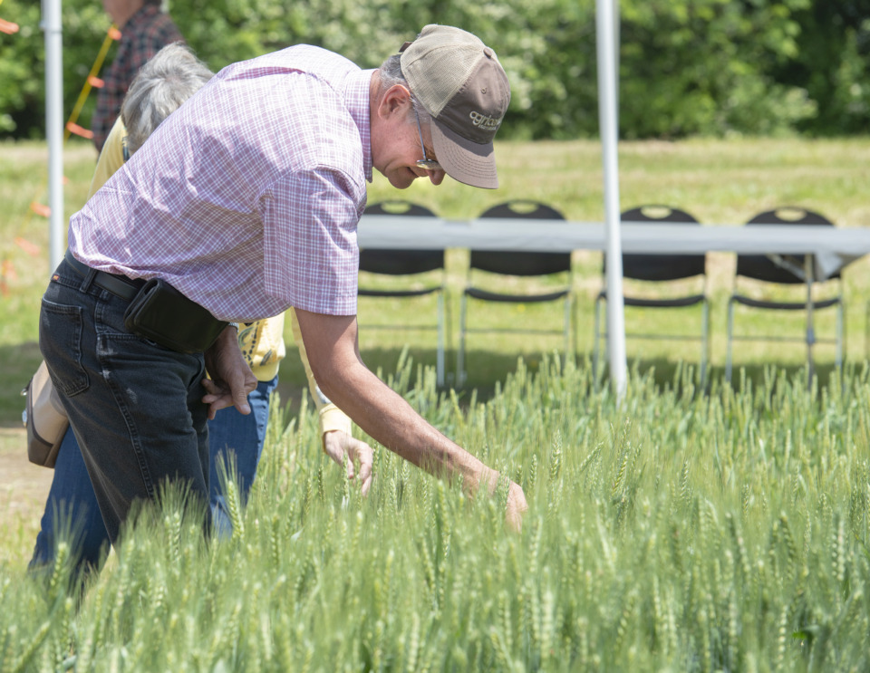 <strong>Lee Schewflen of Sterling, Kansas, looks at some wheat at the Agricenter fields Monday, May 13, 2019 during field day as part of Davos on the Delta. </strong>(Greg Campbell/Special to The Daily Memphian)