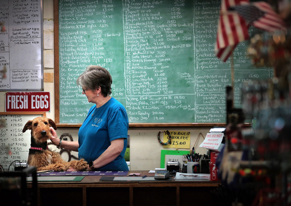 <strong>Beverly Thompson gets a visit from the store dog, Dixie, before the start of a busy day at Hall's Feed &amp; Seed in Collierville on Friday, May 17.&nbsp;On Saturday, May 25, Thompson and her husband, Jimmy, will celebrate 20 years of operating Hall's.</strong> (Jim Weber/Daily Memphian)