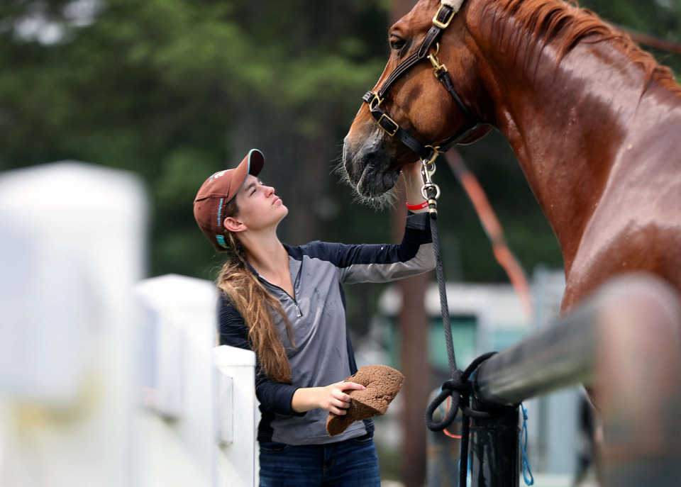 <strong>Isabella Murphy gets Starkko show-ready for 71st Germantown Charity Horse Show Monday, June 3, 2019. The annual event, which kicks off Tuesday, is one of the few all-breed shows in the country.</strong>&nbsp;(Patrick Lantrip/Daily Memphian)