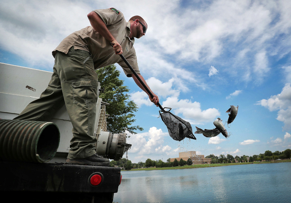<strong>Brandon Harrison with Tennessee Wildlife Resources Agency stocks Appling Lake with catfish on Wednesday, June 5, near the site where the city of Bartlett plans to build a monument to first responders.&nbsp;</strong>(Jim Weber/Daily Memphian)