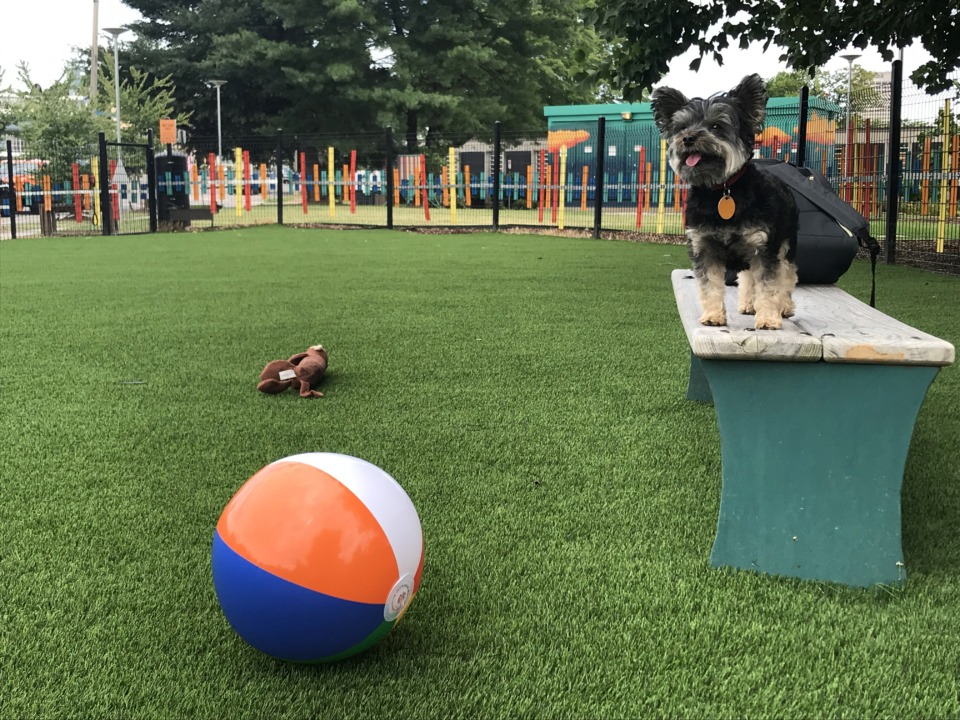 <strong>The Memphis Medical District Collaborative (MMDC) finished installing synthetic turf this week <span>in the off-leash area of the Edge Triangle, allowing d</span>ogs and their owners who frequent the pocket triangle park to enjoy lush, green grass year-round. </strong>(Courtesy of&nbsp;Memphis Medical District Collaborative)