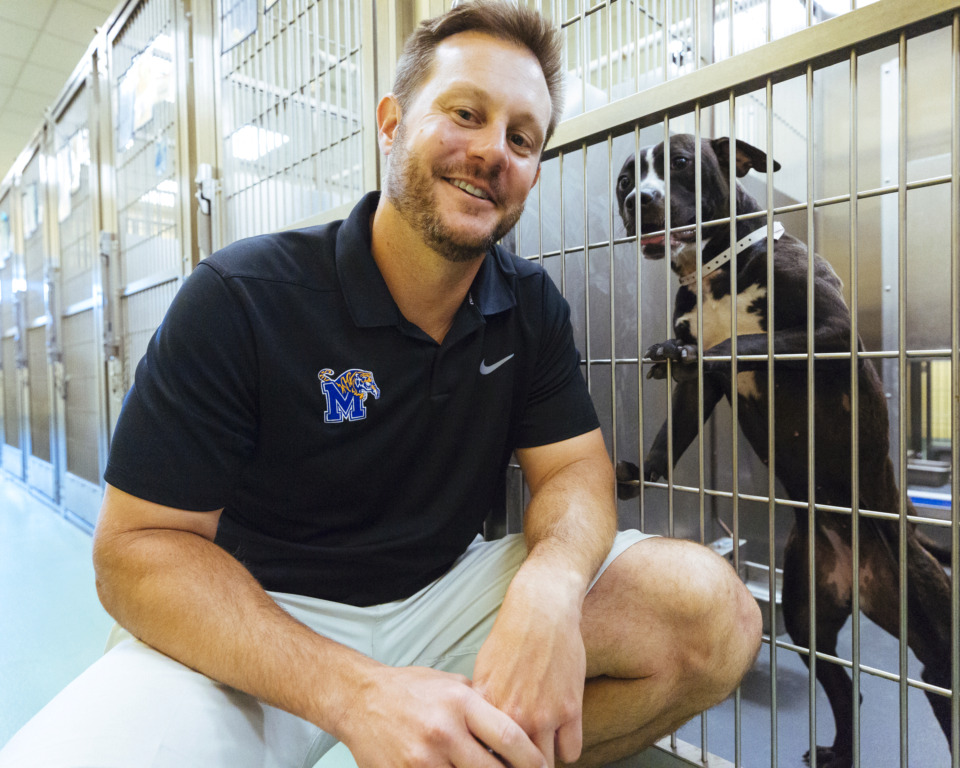 "<strong>University of Memphis offensive line coach Ryan Silverfield took his linemen to volunteer at Memphis Animal Services. Silverfield used the opportunity for the players&nbsp;<span class=""s1"">to give back to the community while building some chemistry.&nbsp;</span></strong><span class=""s1""><strong>&ldquo;It&rsquo;s nice seeing guys running up and down the halls trying to help as many people as they can,&rdquo; he said.</strong>&nbsp;</span>(Ziggy Mack/Special to the Daily Memphian)"