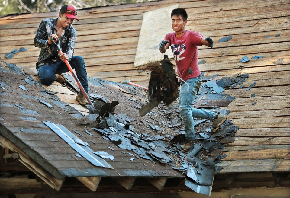 <strong>Jose Perez (left) and Matthew Perez with 5ash Roofing tear off old shingles as community members team up to put a free roof on the Forest Hill Civic Club cabin on Wednesday, July 31.&nbsp;Young Life Ministries, a nonprofit Christian youth organization, holds&nbsp;weekly meetings for high school students in the old cabin throughout the school year.</strong> (Jim Weber/Daily Memphian)