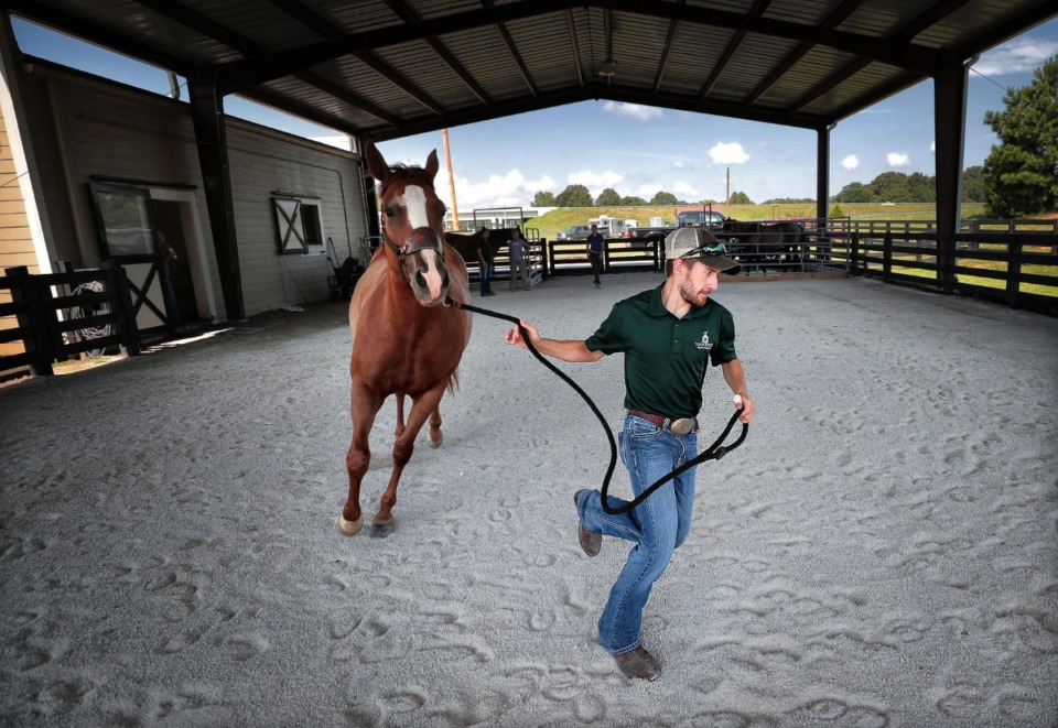 <strong>Technician Ricky Watkins takes Kit Kat for a turn around the corral during a performance exam as doctors and staff treat equine patients at the Tennessee Equine Hospital West on Wednesday, July 31. The hospital is planning an expansion at its Arlington location.</strong> (Jim Weber/Daily Memphian)