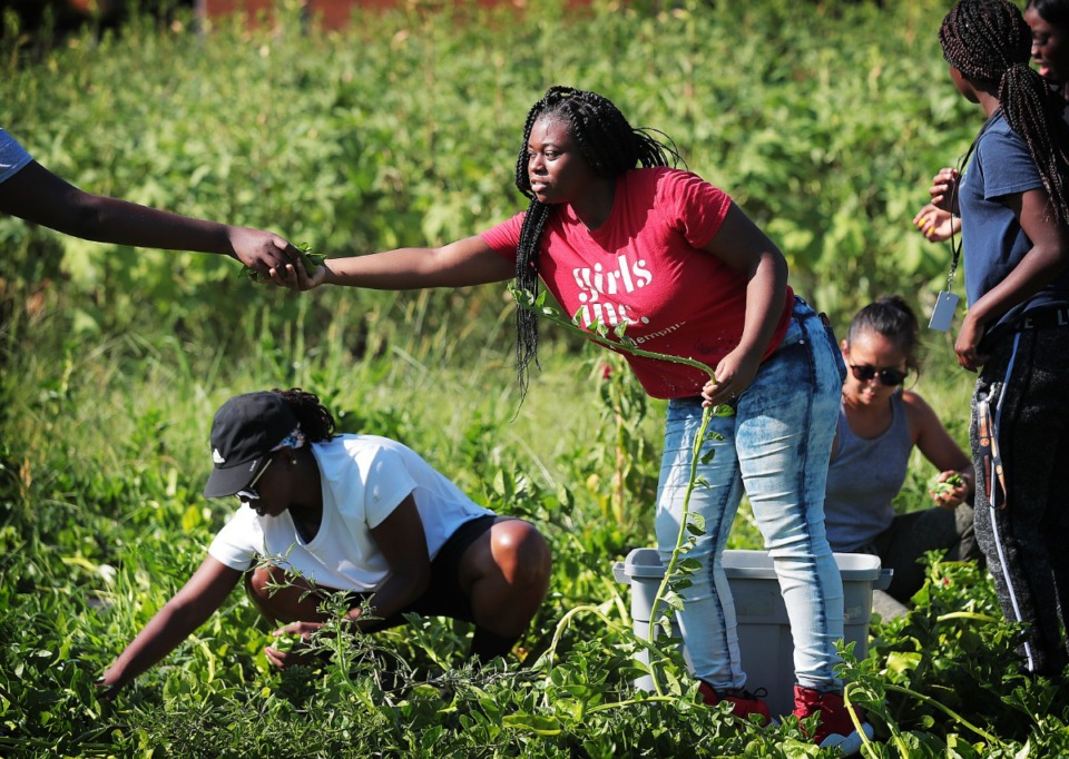 <strong>High school-aged girls work after school and during the summers at the Girls Inc. youth farm in Frayser, cultivating vegetables for sale at local farmers markets to develop entrepreneurial skills. On Thursday, Sept. 12, 2019, the Land Use Control Board approved Girls Inc.'s plan to expand its site by 8 acres to build a $4.5 million community garden and learning center at 1179 and 1199 Dellwood Ave.</strong> (Jim Weber/Daily Memphian)