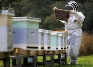 <strong>Lodgers at St. Columba on Oct. 26 can attend the Fall Honey Harvest, with the opportunity to bottle honey and visit bee hives.</strong> (Jim Weber/Daily Memphian)