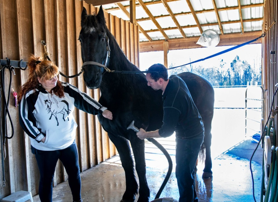 <strong>Tanja Hodges and her husband, Scott, groom their Friesian horse, Rocco, in a barn at Robert Slaughter's home on Quinn Road in southeast Shelby County on Sunday, Jan. 5. The couple, who live nearby, board Rocco at Slaughter's barn and share concerns with Slaughter and other neighbors over a proposal to develop nearby land to create more than 500 homes.</strong> (Mike Kerr/Special to the Daily Memphian)