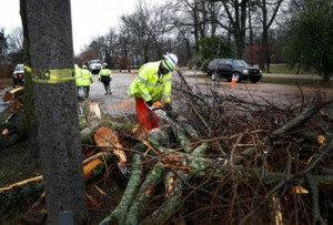 <strong>Tennessee Department of Transportation workers remove a fallen tree on East Parkway North Saturday, Jan. 11. Thousands were left without power after high winds and heavy rains hit the area in the early-morning hours.&nbsp;Memphis Light, Gas and Water Division expects to have all power restored in Shelby County by midnight Monday.</strong> (Mark Weber/Daily Memphian)