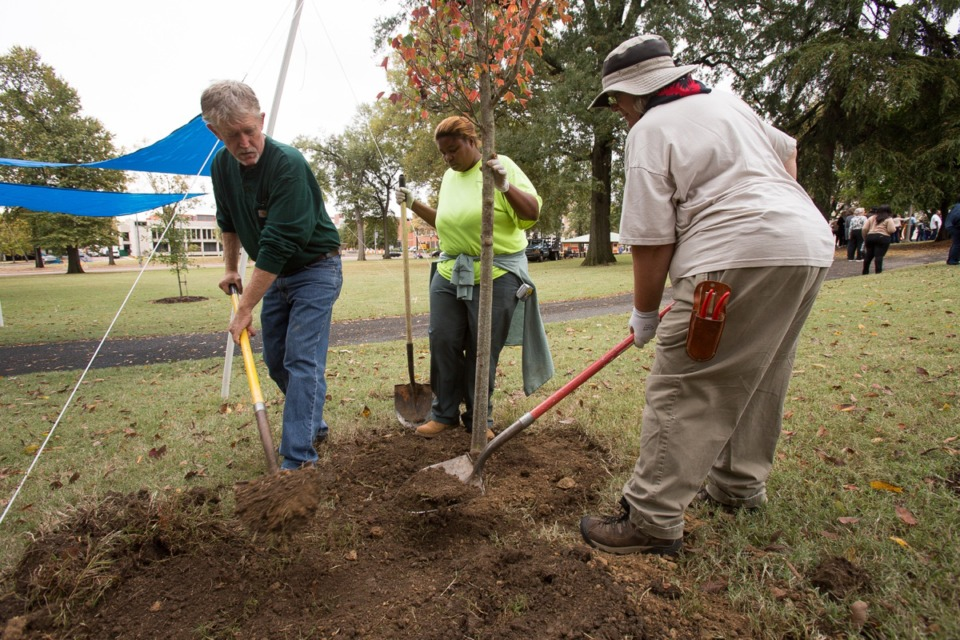 <strong>Memphis city horticulturalist Connie Shepherd, right, plants a Trident Maple tree at &nbsp;Health Sciences Park with assistance from Lynn Hollowell from Memphis Parks Service and Aaron Chadwick representing Arkansas Parks and Tourism, left. The Design Review Board approved signage for the park.&nbsp;</strong>&nbsp;(File/Daily Memphian)
