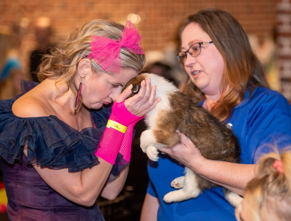 <strong>Christina Hodge (right) introduces Willow, one of the adoptable pets at Collierville Animal Services, to guests including Michelle Meierhofer at the Collierville Cares event Saturday night, Feb. 29, 2020.</strong> (Greg Campbell/Special to The Daily Memphian)