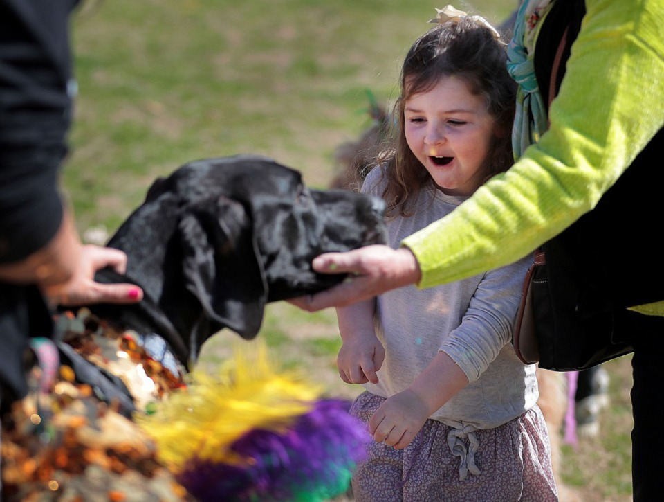 <strong>Edith McCabe, 4, reacts to a Great Dane with a head bigger than her's during a&nbsp;Mardi Growl dog party at Overton Park on March 7, 2020. The event included a costume contest and parade hosted by the Overton Park Conservancy and Hollywood Feed.</strong> (Jim Weber/Daily Memphian)