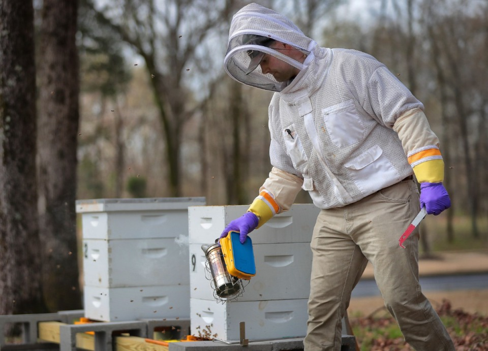 <strong>Kevin Woods with Bee 901 Co. checks the health of hives at Highland Church of Christ in Cordova on March 19, 2020. Woods and longtime friend Nathan Bland started the nonproft, which&nbsp;yields 45 gallons of honey per year that is sold to benefit a different charity each year, in 2017.</strong>&nbsp;(Jim Weber/Daily Memphian)