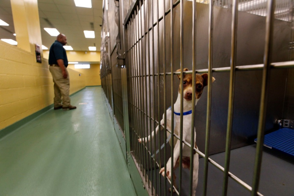 "<strong>The Memphis Animal Shelter, seen here in 2016, has unique problems during the ""Safer at Home"" era.</strong> (Lance Murphey/Daily Memphian file)"
