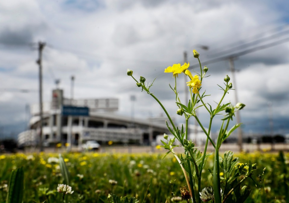 <strong>Dandelion flowers grow in a vacant lot at the corner of Hollywood and Milton on Wednesday, May 20, 2020. The Edge Board approved a residential tax incentive for a 127-unit apartment to be built on the 2.6 acres.</strong> (Mark Weber/Daily Memphian)