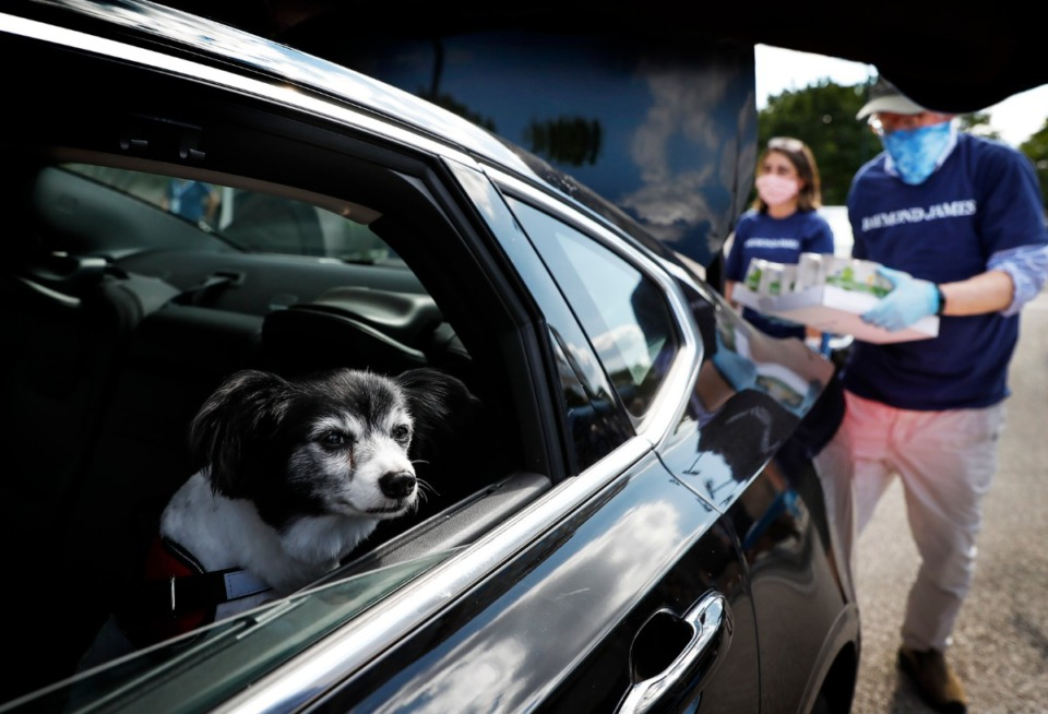 <strong>Family pet Bengi looks on as Raymond James employees grab bags of food from his owner's truck on Thursday, May 21, 2020. Raymond James organized a food drive among its 900 employees, which will be donated to the Midsouth Food Bank.</strong> (Mark Weber/Daily Memphian)