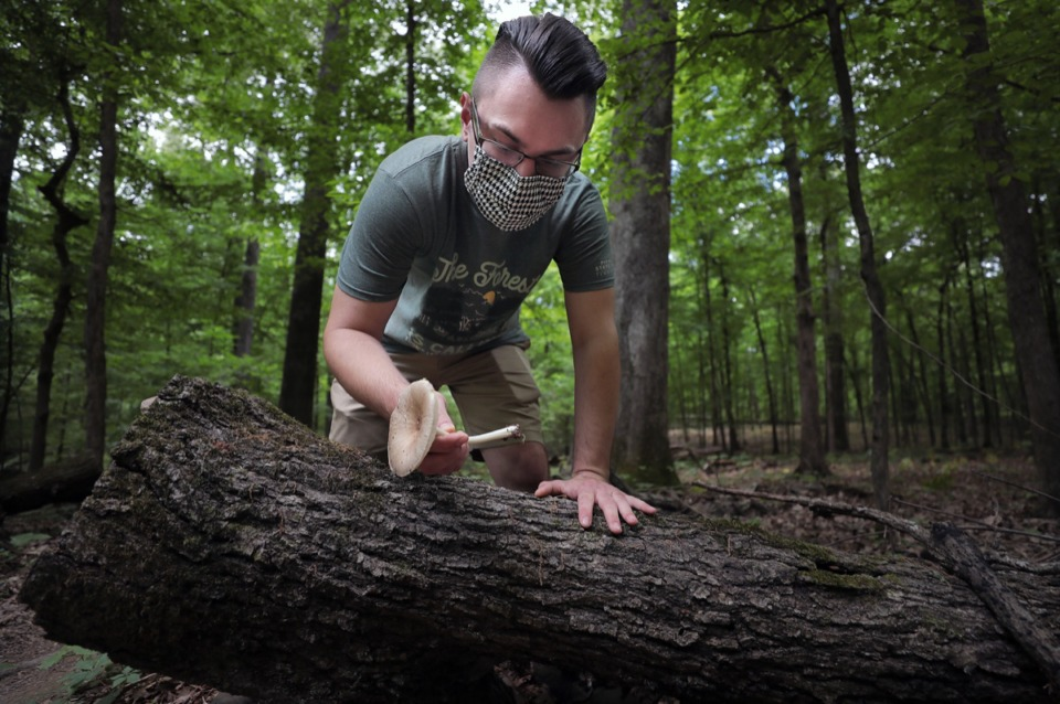 <strong>Benjamin Winborn finds a deer mushroom behind a rotting log while foraging for edible mushrooms in Nesbit Park in Bartlett on May 21, 2020.</strong> (Patrick Lantrip/Daily Memphian)