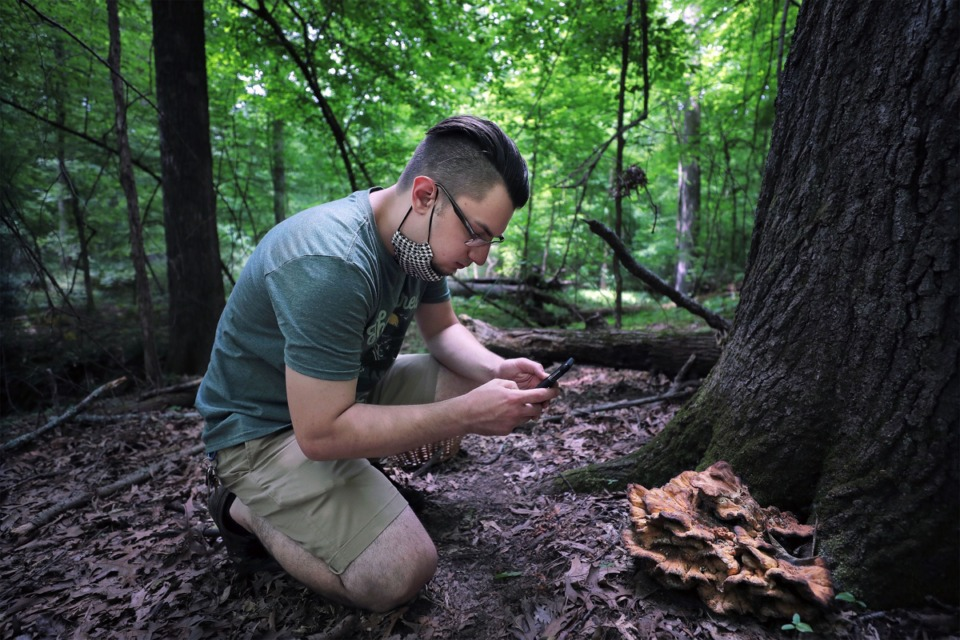<strong>Benjamin Winborn takes a photo of a chicken of the woods mushroom while foraging for edible mushrooms in Nesbit Park in Bartlett.</strong> (Patrick Lantrip/Daily Memphian)