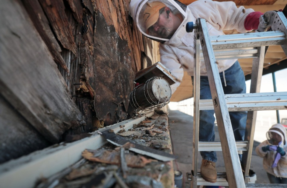<strong>David Glover, known as the Bartlett Bee Whisperer, uses his smoker on June 17 to pacify a hive of bees that had taken up residence in a North Memphis industrial complex.</strong> (Patrick Lantrip/Daily Memphian)