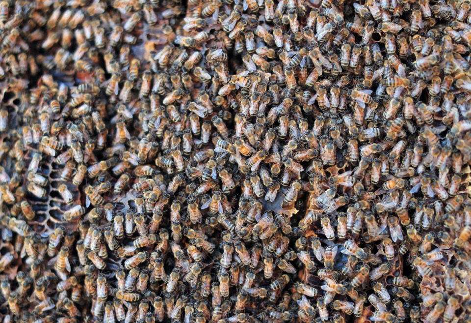 <strong>More than 80,000 bees crawl on the outside of a seven-foot hive they'd&nbsp; built in an exterior wall of an old industrial complex in North Memphis.</strong> (Patrick Lantrip/Daily Memphian)