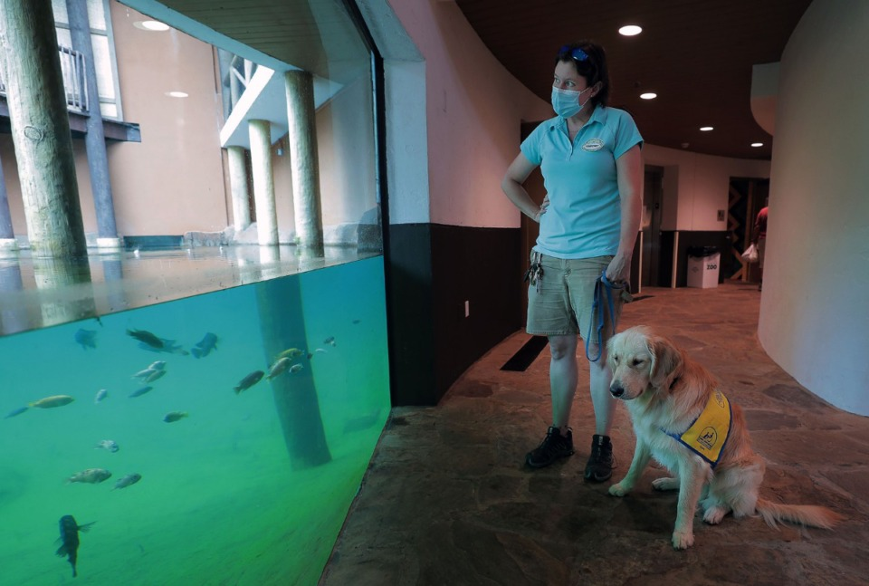 <strong>North, the golden retriever, watches the fish while Courtney Janney, a curator at the Memphis Zoo, makes her rounds July 9, 2020.</strong> (Patrick Lantrip/Daily Memphian)