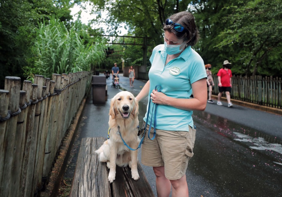 <b>North is being prepared to some day serve as a service dog, most likely for an individual with a physical disability. He was paired with his trainer through the Canine Companions for Independence program. </b>(Patrick Lantrip/Daily Memphian)
