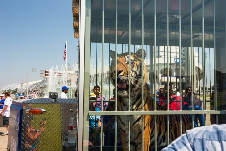 <strong>TOM III mades an appearance at Tiger Lane before the season opener in 2013.</strong> (Daily Memphian file)