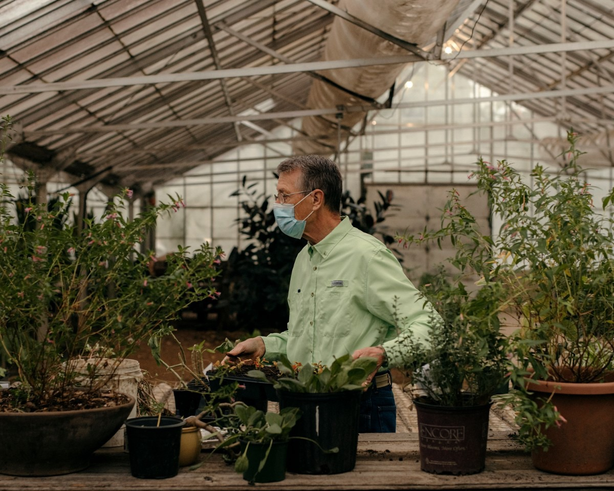 <strong>Tom Rieman, a Master Gardener, transports some newly potted plants to be watered in a greenhouse owned by the City of Memphis.</strong> (Houston Cofield/Special To The Daily Memphian)