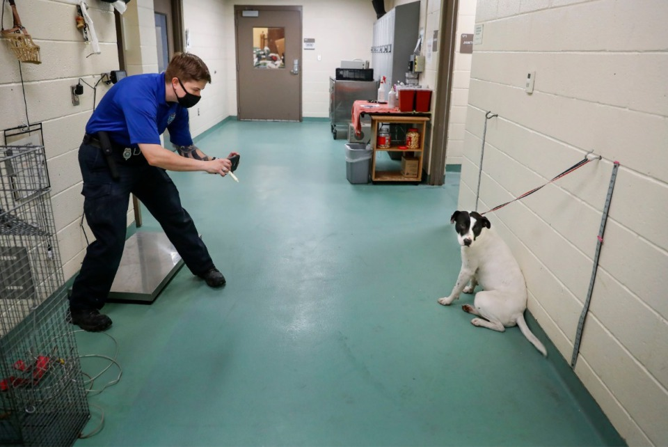 <strong>Service officer Amanda Sutter takes a picture of a stray dog during the intake process at Memphis Animal Shelter on Tuesday, Nov. 10, 2020. MAS has half the dogs for adoption as it did before the pandemic.</strong> (Mark Weber/The Daily Memphian)