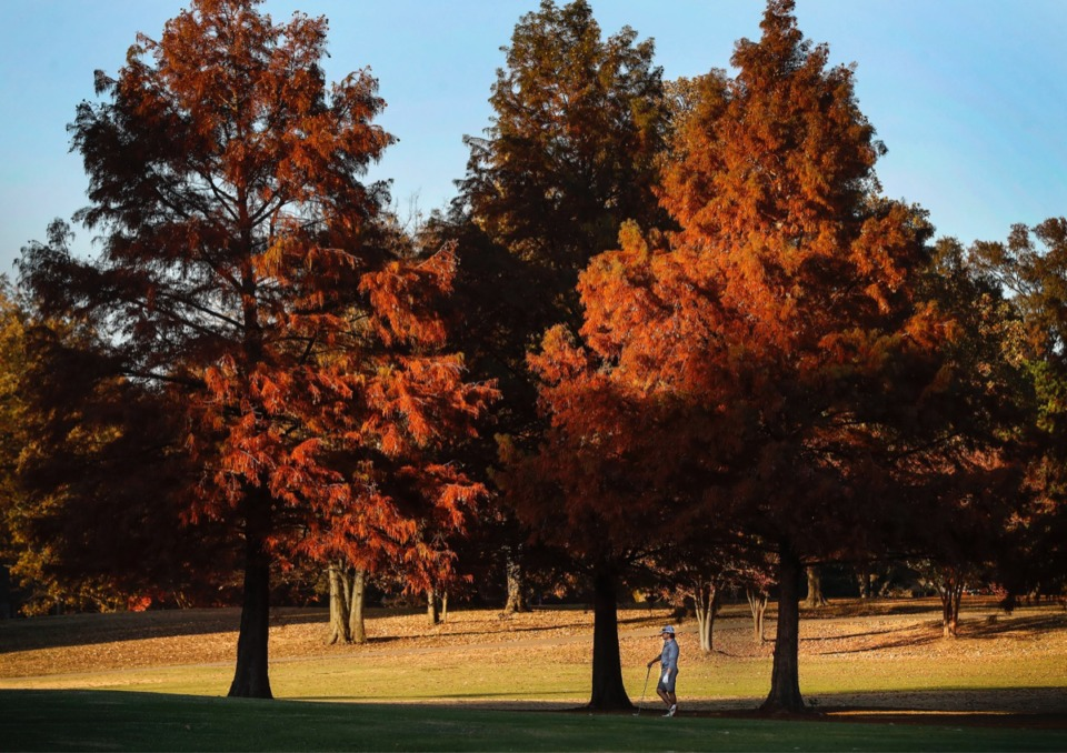 <strong>A golfer waits to hit his fairway shot on the 6th hole at the Links of Galloway on Thursday, Nov. 12, 2020.</strong> (Mark Weber/The Daily Memphian)