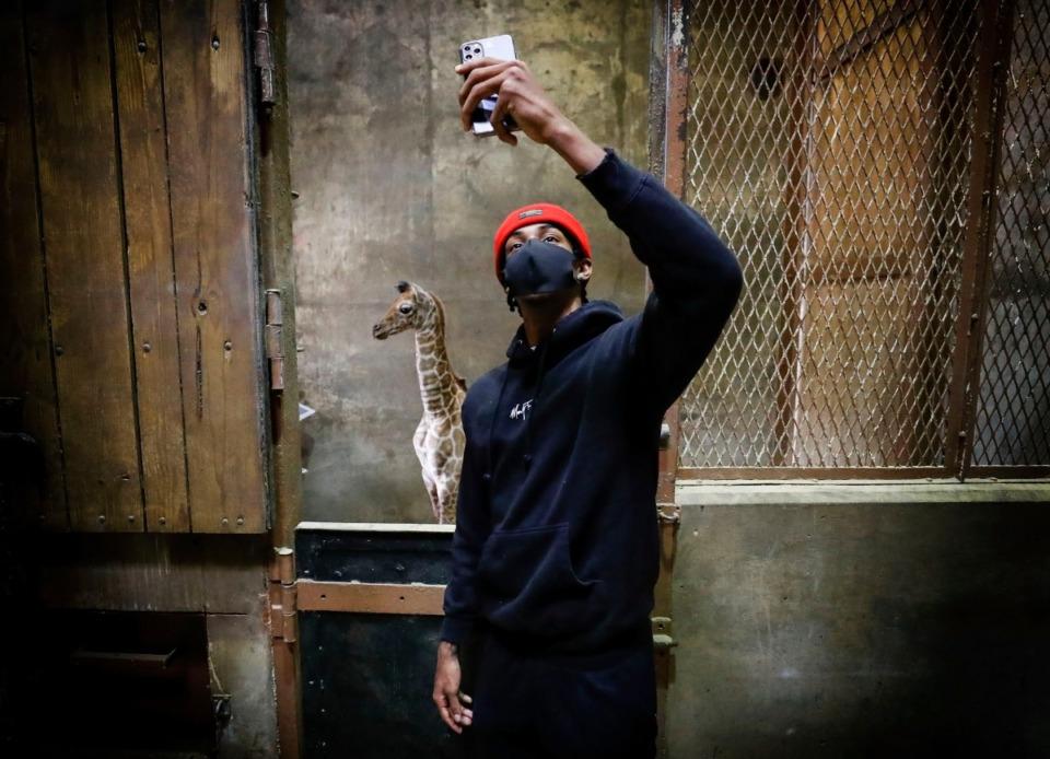 <strong>Memphis Grizzlies star guard Ja Morant took a selfie with the Memphis Zoo&rsquo;s new giraffe calf, Ja Raffe in November.</strong> (Mark Weber/The Daily Memphian)