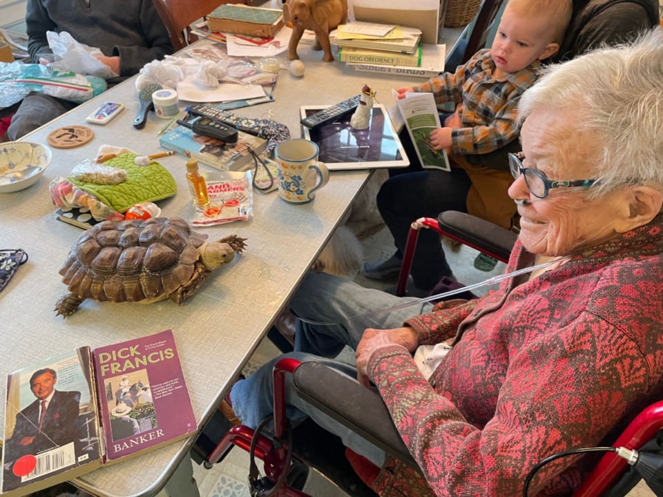 <strong>Virginia Calkins, age 96, looks delighted to receive a tortoise for Christmas.</strong> (Geoff Calkins/Daily Memphian)