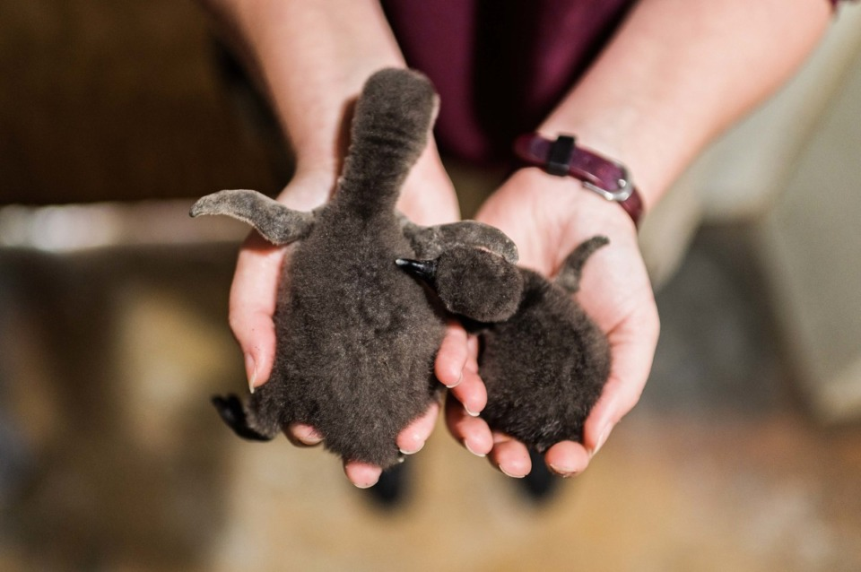 <strong>The Memphis Zoo&rsquo;s two newest babies.</strong> (courtesy Memphis Zoo)