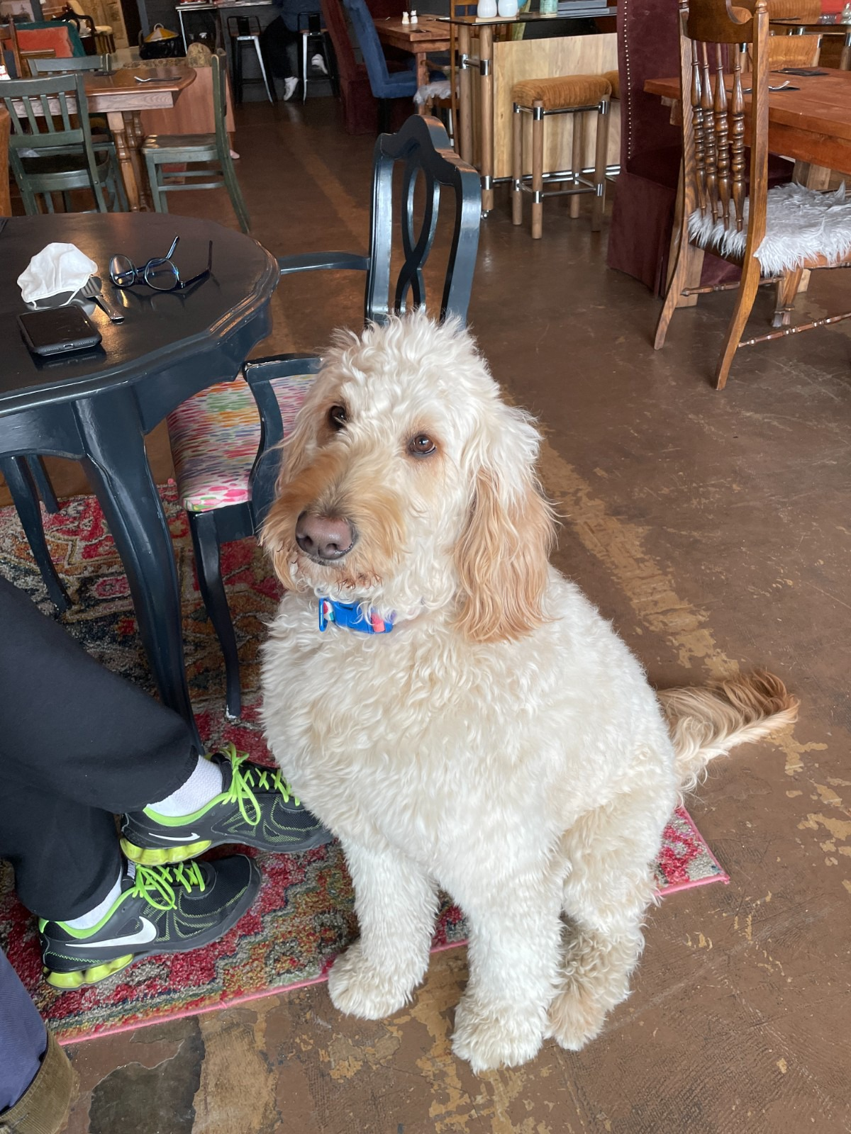 <strong>Butter, a large goldendoodle, is a polite and welcome addition to the front of the house.</strong>&nbsp;(Jennifer Biggs/Daily Memphian)