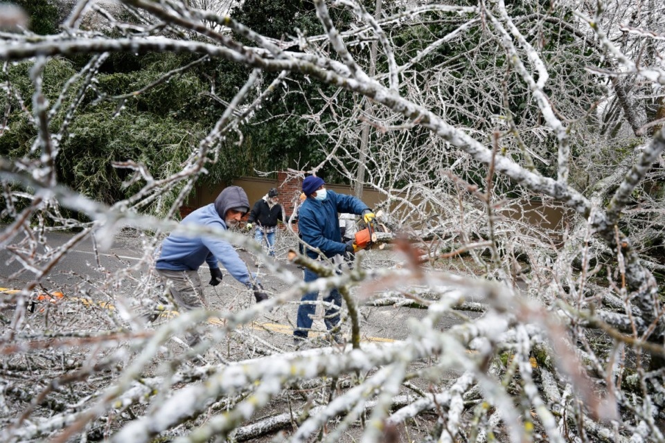 <strong>By noon Thursday, Feb. 11, public works crews had cleared or were in the process of clearing 15 downed trees across the city, including this one that fell&nbsp;onto Walnut Grove near White Station.</strong> (Mark Weber/Daily Memphian)