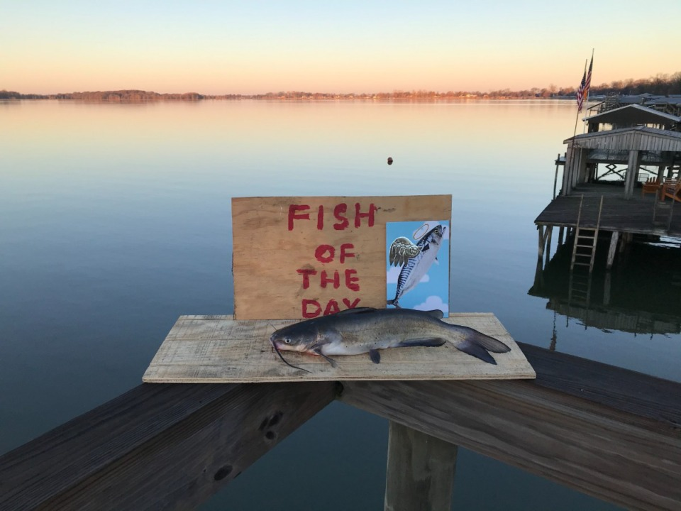 <strong>Last April, David McCandless realized he&rsquo;d caught a fish every day at his home on Horseshoe Lake. Thus, began his &ldquo;Fish of the Day.&rdquo; &ldquo;I released 99 percent of the fish I caught,&rdquo; he said.&nbsp;</strong>(Submitted)