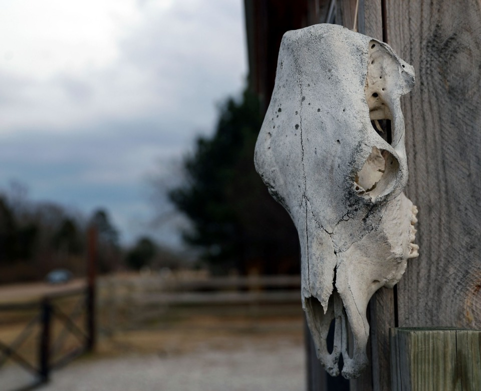 <strong>A decorative cattle skull adorns the outside of Marshall Steakhouse Feb. 25, 2021.</strong> (Patrick Lantrip/Daily Memphian)