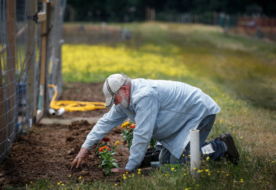 <strong>Andy Miller plants Zinnia&rsquo;s flowers outside his fenced lot at the Shelby County&rsquo;s Community Gardens near Shelby Farms last May. Applications for this year are being accepted now for the 400 free plots.&nbsp; </strong>(Mark Weber/Daily Memphian file)