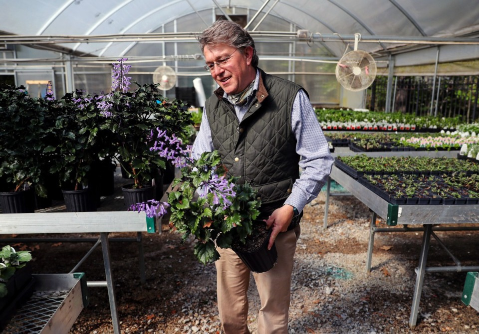 <strong>Dale Skaggs checks out the Velvet Elvis plants at the Dixon Gallery &amp; Gardens March 24, 2021.</strong> (Patrick Lantrip/Daily Memphian)
