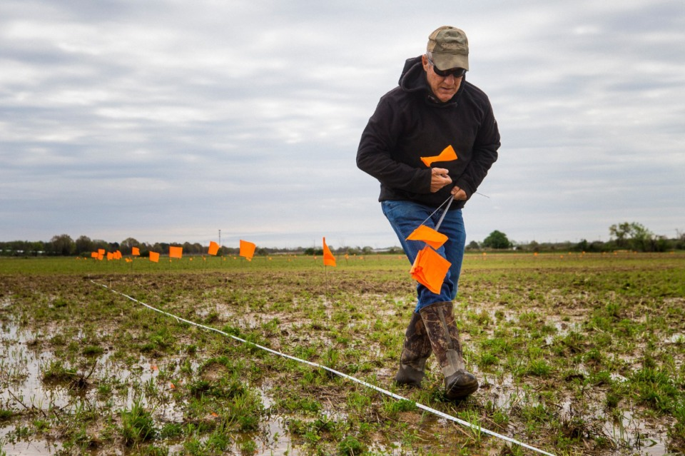 <strong>Agricenter Director of Research Dr. Bruce Kirksey measures and plots areas to plant blueberries along fields at Shelby Farms on March 31, 2021.</strong> (Ziggy Mack/Special to Daily Memphian)
