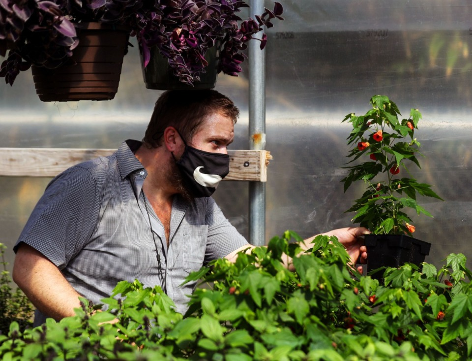 <strong>Memphis Botanic Garden greenhouse manager Tyler Taylor inspects a plant in March 2021</strong>. (Patrick Lantrip/Daily Memphian file)