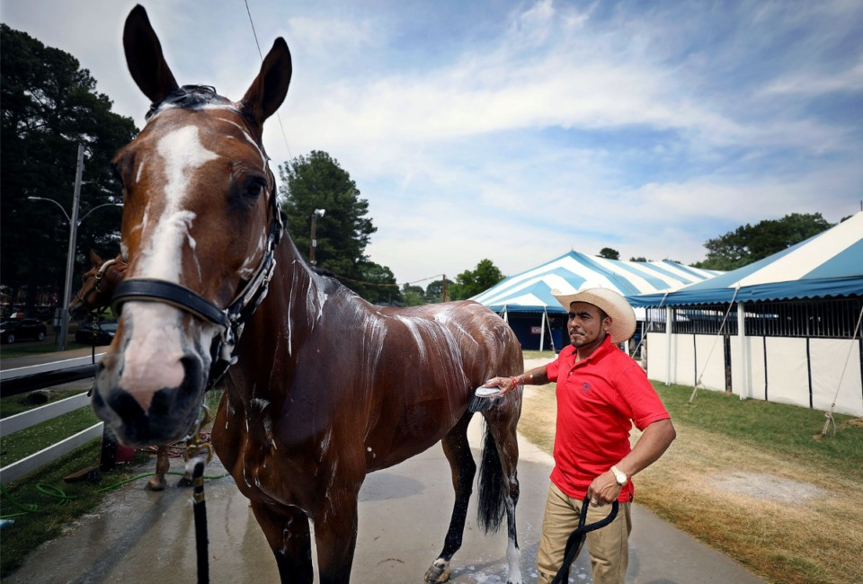 <strong>Alfredo Ramirez gives his horse Jolene a bath on the eve of the Germantown Charity Horse Show June 3, 2019. The show is returning after a one-year absence due to the coronavirus pandemic</strong>. (Patrick Lantrip/Daily Memphian.)