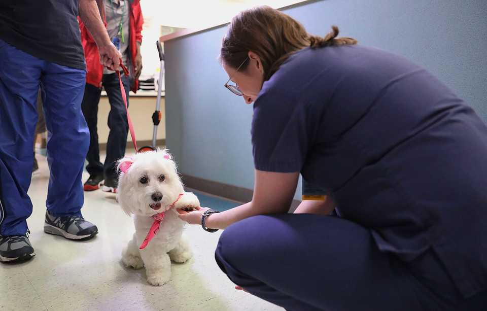 <strong>St. Francis Hospital patients weren&rsquo;t the only people excited to see Lily, a therapy dog that made the rounds on Wednesday, Sept. 26.&nbsp;Even staff members have asked to see her, said&nbsp;Elliott Smith, community relations manager at St. Francis. &ldquo;It&rsquo;s good to have a pet, just to have something there that comforts you in the time of need,&rdquo; he said.</strong> (Patrick Lantrip/Daily Memphian)
