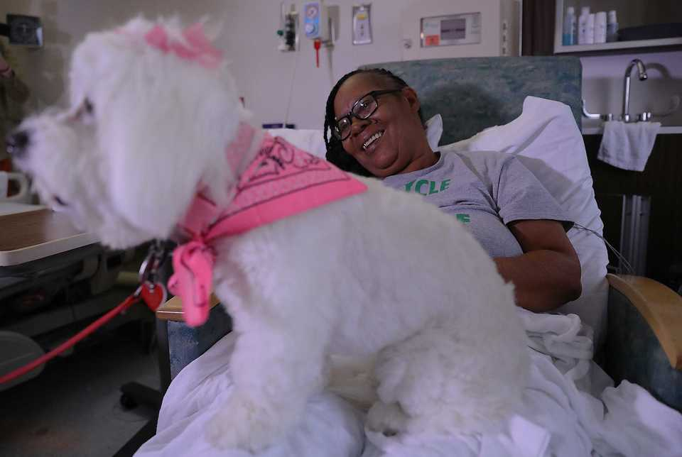 "<strong>Lily visited St. Francis patient&nbsp;Robbie Gail Woods on Wednesday, Sept. 26. ""I&rsquo;m hoping she comes back to visit me,&rdquo; Woods said.</strong>&nbsp;<b></b>(Patrick Lantrip/Daily Memphian)"