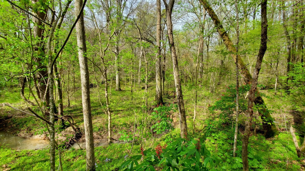 <strong>A creek valley meanders through the woods in the parcel of land donated to T.O. Fuller State Park.</strong> (Courtesy Wolf River Conservancy)