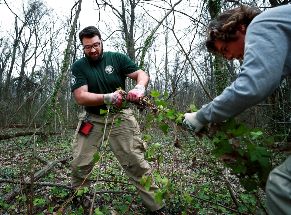 <strong>Pierce Curran (left), AmeriCorps National Civilian Community Corps team leader, helps Joel Foster pull up English ivy in Overton Park. The group has been in Memphis for two weeks helping to eliminate invasive plant species in Overton Park and Meeman Shelby Forest State Park.</strong> (Houston Cofield/Daily Memphian)