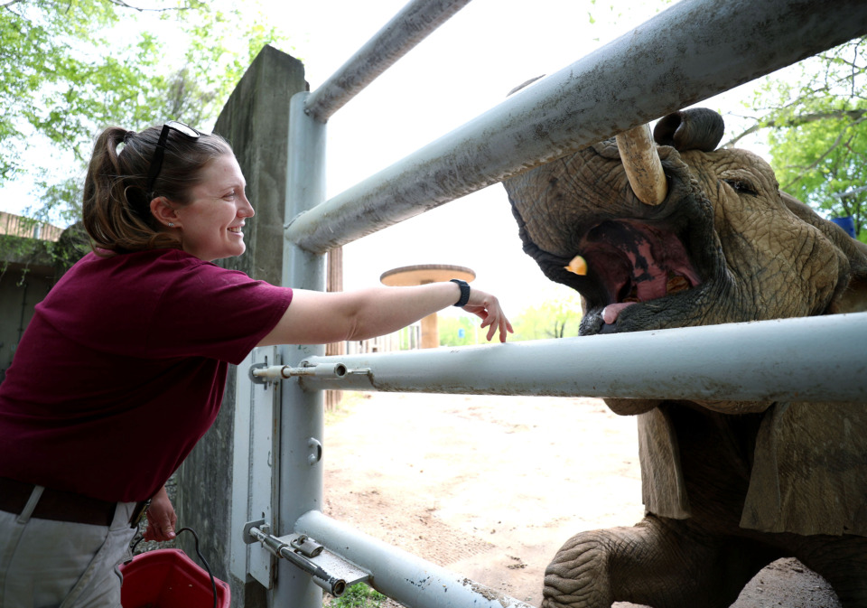 <strong>Jenny Mitchell, a pachyderm keeper at the Memphis Zoo, goes through her training routine with one of her favorite elephants, Gina. Mitchell recently came back to Memphis to work with elephants and rhinos after working for the non-profit Elephants for Africa in Botswana.</strong> (Houston Cofield/Daily Memphian)