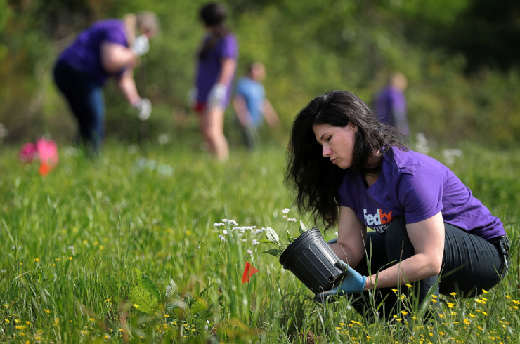 <strong>Volunteer Jes Crownover with FedEx plants native flowers in a field along a new section of the Wolf River Greenway in Raleigh on April 24, 2019, in preparation for a grand opening Saturday.</strong> (Jim Weber/Daily Memphian)